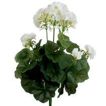 Geranium bush vit 36cm
