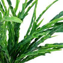 Gräsbuskgrön 48 cm 3st
