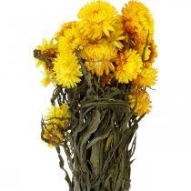 Halmblomma gul torkade torkade blommor dekorationsgrupp 75g