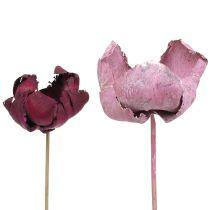 Träblomma, palmkoppmix rosa-ljung 25st