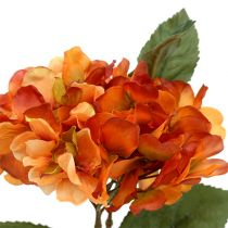 Hortensia orange 30 cm 3st