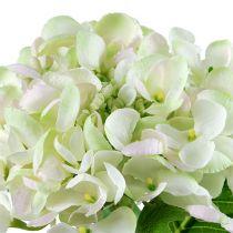 Hortensia vitgrön 60cm