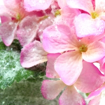 Hortensia rosa med snöeffekt 25cm