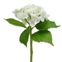 Hortensia 33 cm vit 1p