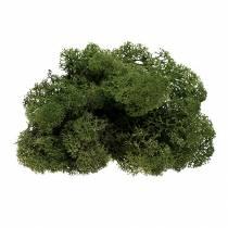 Mossrenmossa grön 400g