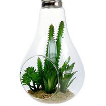 Kaktusar i glas för att hänga 21 cm