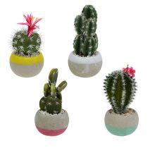 Kaktusar i en kruka blandning H13cm 4st