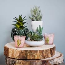 Kaktus i en gryta Ø12cm 1 st