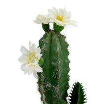 Kaktus i en kruka med blomma 21 cm vit