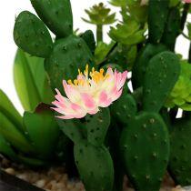 Kaktus med blomma 14cm i en trälåda