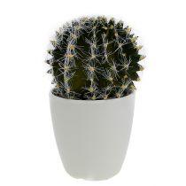 Kaktus i kruka grön 14cm