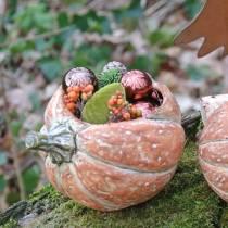 Pumpa för plantering av apelsin 19 × 15 × 16cm