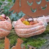 Pumpa för plantering av apelsin 28 × 15 × 14 cm