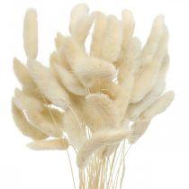 Lagurus torkat kaninsvansgräs blekt 40-50cm 50st