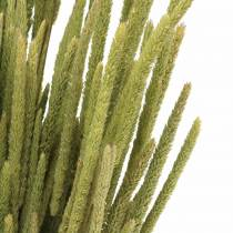 Timothy gräs naturligt 50-60cm 100g