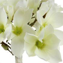 Magnolia gäng vit 40cm 5st