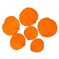 Moneta lämnar aprikos 50 g