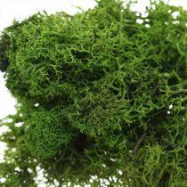 Dekorativ mossa för hantverk mörkgrön naturmossa konserverad 40g