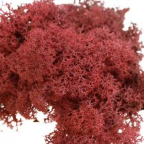 Dekorativ mossa för hantverk Röd naturlig mossa färgad i en 40 g påse