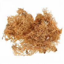 Dekorativ mossa för hantverk Orange färgad naturlig mossa konserverad 40g