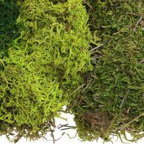 Dekorativ mossa för hantverk mix grön, ljusgrön naturlig mossa 100g