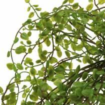 Mühlenbeckia buskgrön 42cm