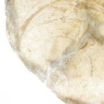Stranddekorationer, Capiz-skal 5–10 cm, naturföremål, pärlemor, maritim 1 kg