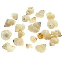 Umachi mussla 500 g