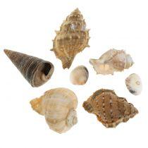 Musselsortiment naturligt 500g