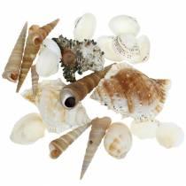 Musselmix och snigelskal i ett naturligt nät 400g