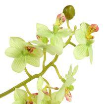 Orchid 97cm ljusgrön