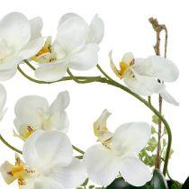 Phalaenopsis orkidé för att hänga H26cm grädde