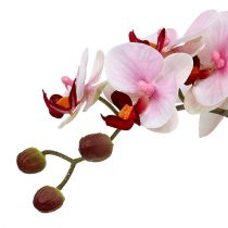 Orchidrosa i keramisk kruka 31cm