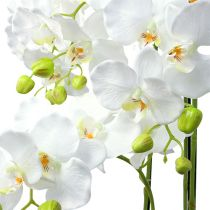 Orkidévit med klot 110cm