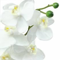 Orkidévit 77cm