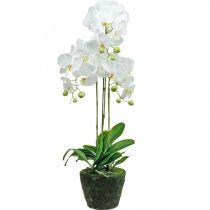 Konstgjorda orkidéer för den vita potten 80cm