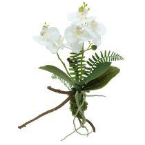 Vit orkidé med mossbollar och rötter 36cm