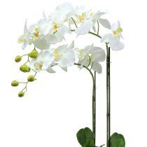 Orkidé vit på jordkula 65cm