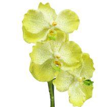 Orkidé med rötter ljusgrön L43cm