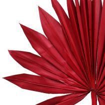 Palmspear Sun mini röd 50p
