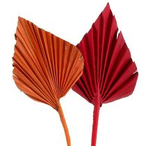 Palmspear diverse röd / orange 50st