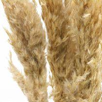Torr dekoration pampas gräs, torkad, blekt 70-75cm 6 stammar