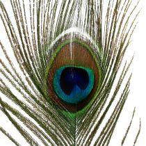 Påfågelfjädrar 22cm - 30,5 cm 12st