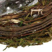 Vinrankor och mossplanter 35 cm x 20 cm