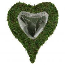 Växt hjärtmossa 28cm x 23cm