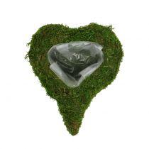 Växt hjärtmossa 23cm x 19cm