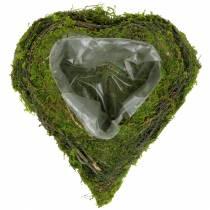 Plantera hjärta vinstockar, mossa 22cm x 20cm H7cm