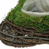 Plantera hjärtvin, mossa 22cm x 28cm H8cm