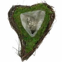 Växt hjärta vinstockar, mossa 26cm x 36m H9cm