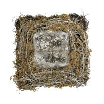 Växtkudde tillverkad av vinstockar och mossa 20 cm x 20 cm